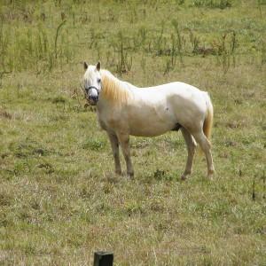 Le cheval lorem ipsum